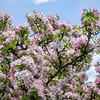 spring_15_023
