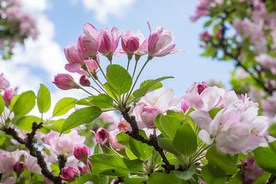 spring_15_025