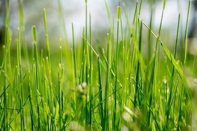 spring_15_029