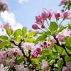 spring_15_024
