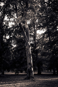 strom-13