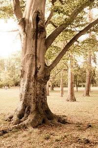 strom-15