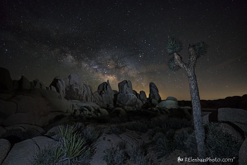 Joshua Tree Milky Way