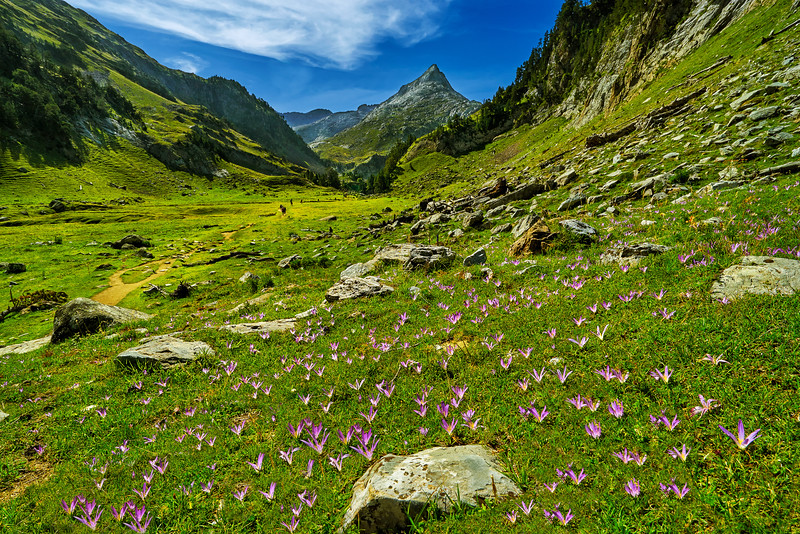 Flowers in Possets y Maladeta National Park.
