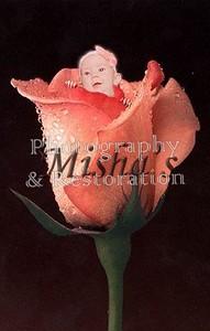 pink rose Sophie