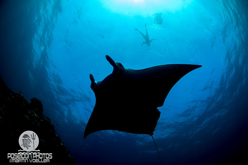 Manta and Swimmers