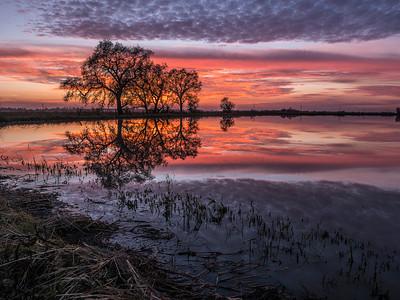 Allen_G9_Travel_Sunset Sensation80mg sm