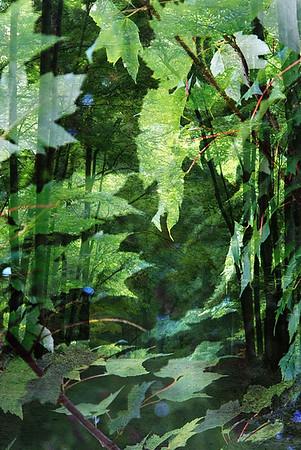 Forest Wonder