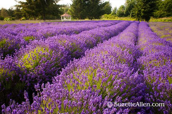Lavender_2268 FB