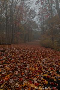 Rainy Country Road