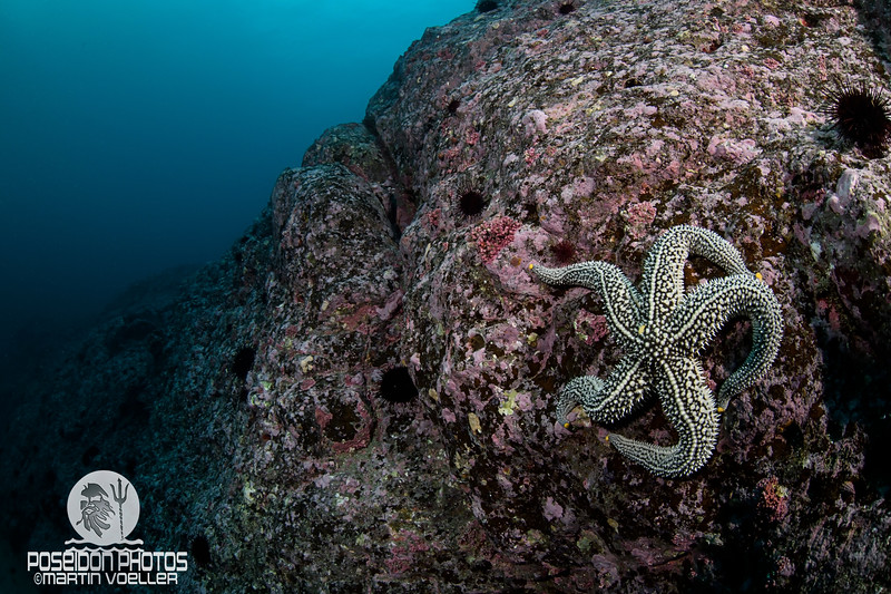 Lonely Star Fish