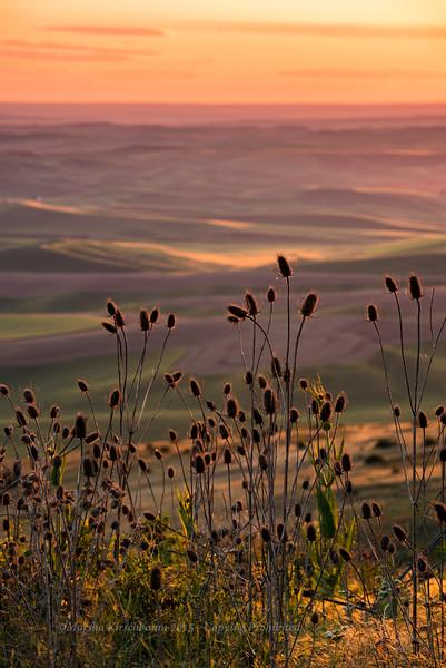 Wild Grasses - Steptoe Butte