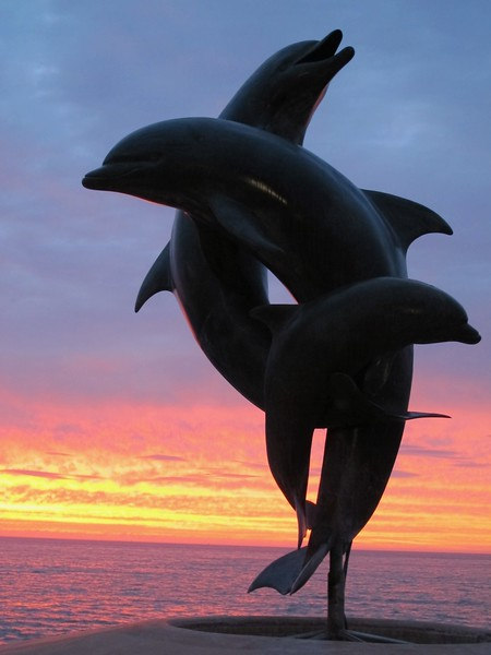 Dolphins at Sunset, Puerto Vallarta