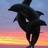 Dolphins at Sunset, Puerto Vallarta