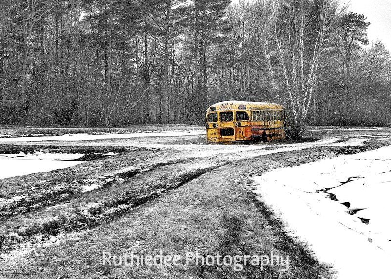 old bus in a bog 15.jpg