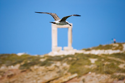 FLYING OVER NAXOS - Naxos, Greece  While I couldn't get both the bird and Naxos' most famous icon, the Arch of the Temple of Apollo, in focus, and also wish this image wasn't quite so centered, I still like it.
