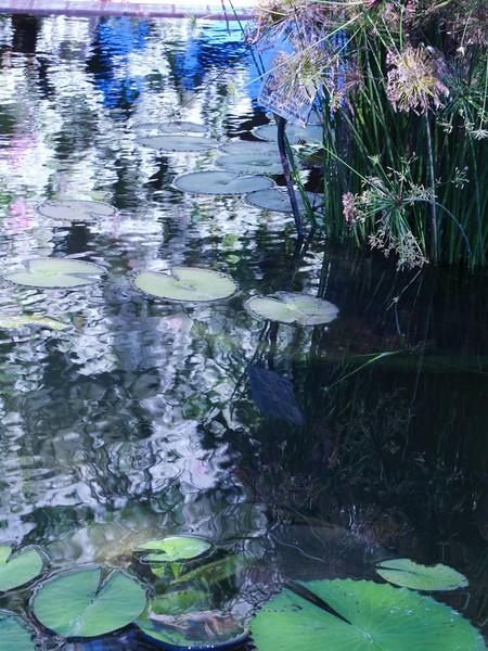 Water Lily Reflections, Botanical Garden, Puerto Vallarta