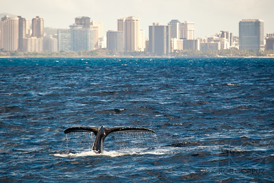WHALE OF A TAIL - Honolulu, Hawai'i, USA