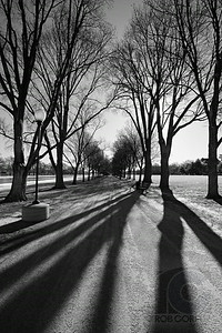 TREE SHADOWS - Washington DC, USA