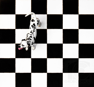 SPOTS ON SQUARES - Lapulapu, Philippines  This is George, my friend Jake's in-law's dog.  I took this from his (Jake's) balcony.  I'm not sure why they (the in-laws) decided to paint this particular pattern onto their patio, as there were no giant chess pieces in sight, but I'm glad they did.    While I would've loved to have George in a different position, and a different pose, he wasn't the most cooperative model I've worked with (for instance, the possibility of the subject peeing directly on the backdrop is generally much farther down my list of potential concerns), so this was the best I could do, particularly since I put off trying this shot until a few hours before my flight out of the Philippines.    Even though I was leaning out over the balcony as far as I could (without risking bodily harm) to try and get a straight perspective, I still had to remove some distortion in photoshop, as well as boosting the contrast and removing a couple of tree branches peeking in to the bottom right square.    Thanks to Hassan for trying his best to keep George on the squares and for holding the strobe.
