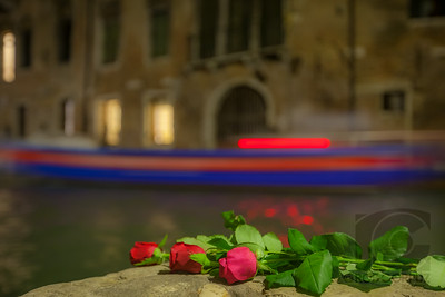 ROSES AND A BOAT - Venice, Italy