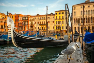 SEAGULL - Venice, Italy