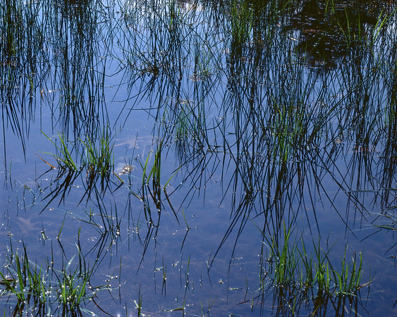 Spring Grass And Sky Reflections