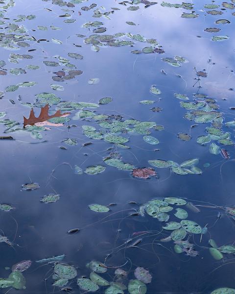 Cloud Reflections And Oak Leaf