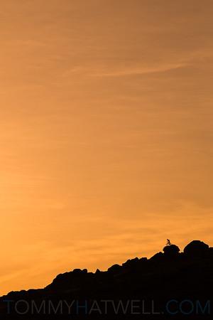 Boris Tor - Dartmoor