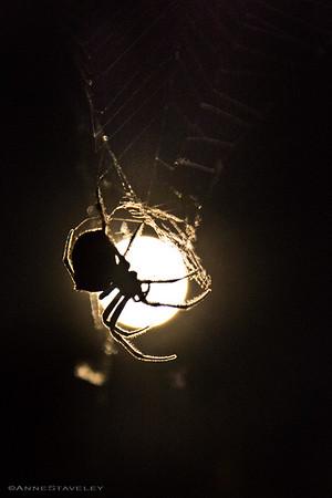 2016-10-15 SPIDER
