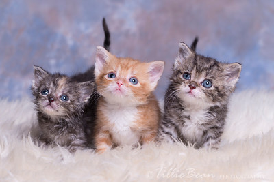 Raindrops on roses and whiskers on kittens...