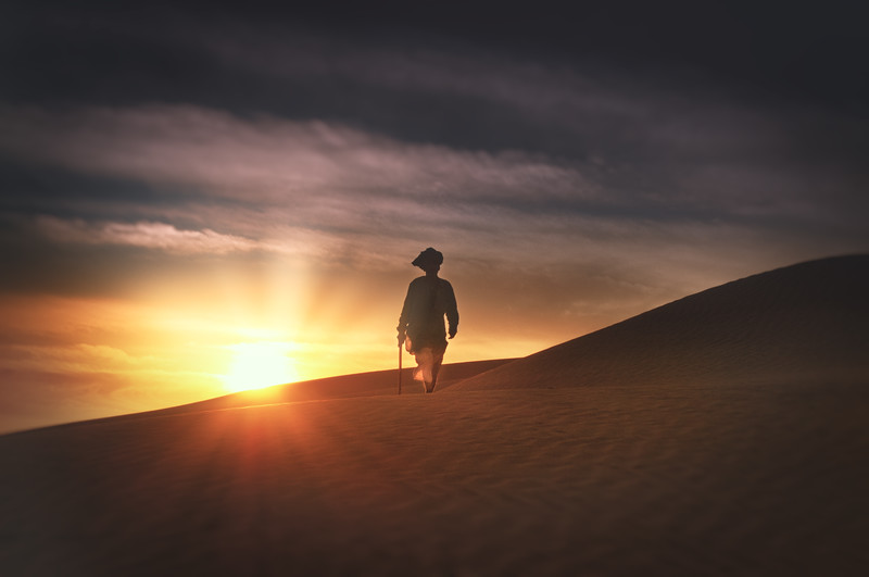The Shepherd - India