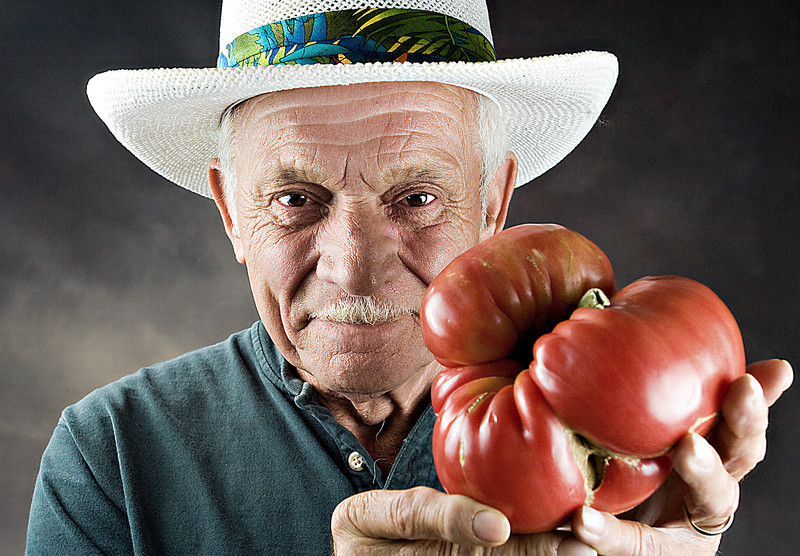 Paul Hastings is seen with a tomato grown in his back yard. The brandywine tomato is 18.14 inches in circumference and weighs 2.5 pounds. Mr. Hastings says the brandywine comes from an Amish strain.