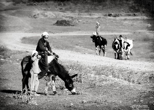 Alcácer de Quibir