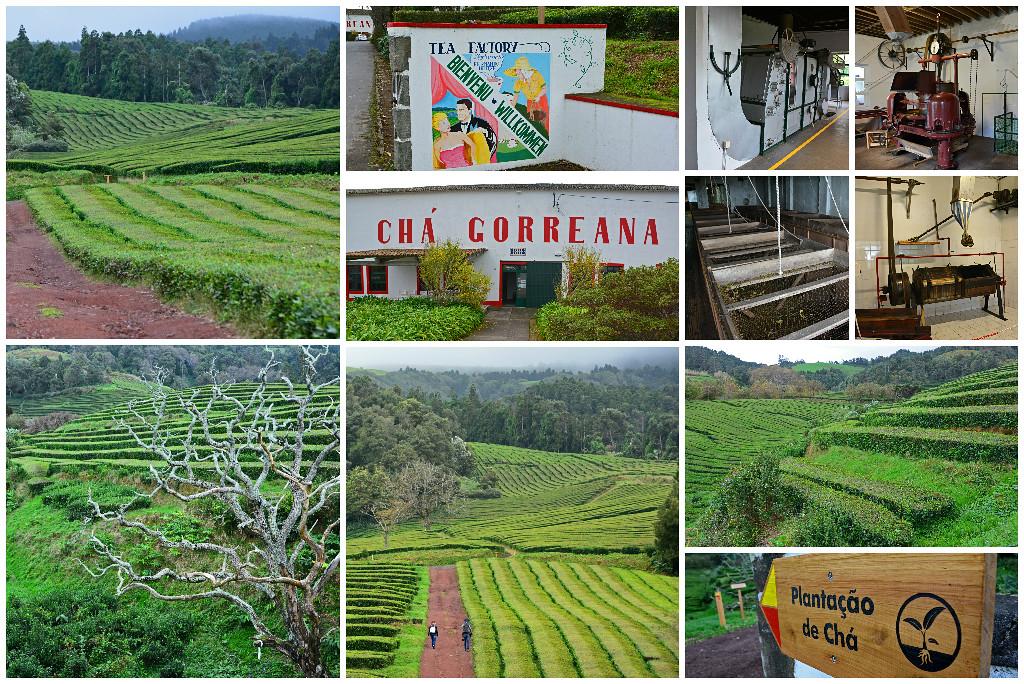 Cha Gorreana Tea Plantation São Miguel