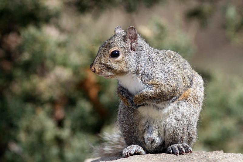 April 21 2014 - Squirrel