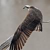 April 13 2014 - Osprey Stretch