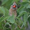 August 19 2014 - Cardinal