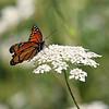 August 29 2014 - Monarch
