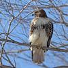 January 29 2014 - Hawk