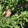 July 15 2014 - Cardinal