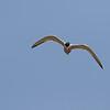 June 29 2014 - Tern