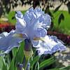 June 13 2014 - Iris