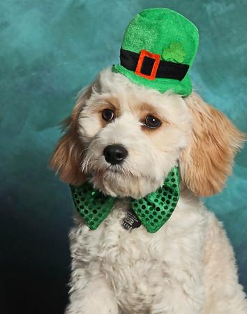 March 17 2014 - Saint Patrick's Day