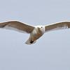 May 28 2014 - Gull