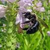 September 14 2014 - Pollinator