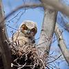 April 15 2015 - Owl