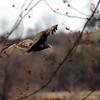 April 21 2015 - Vulture
