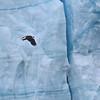 August 5 2015 - Glacier Eagle