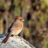 December 4 2015 - Cardinal